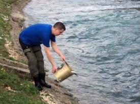 Otvorena ribolovna sezona – rijeka Lištica poribljena pastrvom